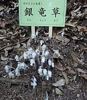 癒しの御神水が湧く聖地 奈良・狭井神社