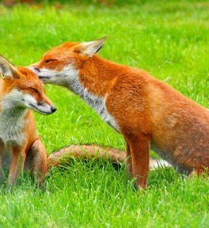 稲荷神社とお狐さんの不思議な実話