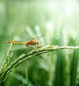 日本人がお米を大切にしてきた神様的な理由